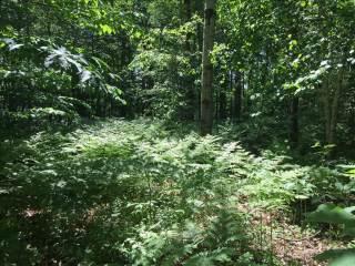 000 Tipi Trail, Buckley, MI 49620