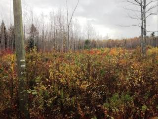 Lot 2 Weisner Rd, Lakeville, NB E1H 1