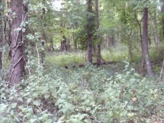 1997 Cross Creek Road, Buffalo, WV 25033