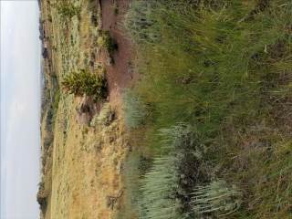 Tbd Spruce Springs Road, Laramie, WY 82070