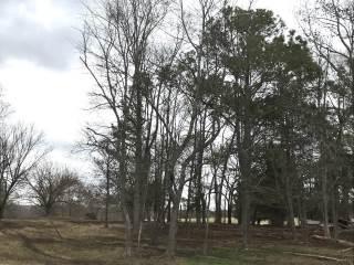 194 Old Benton Way, Louisburg, NC 27549