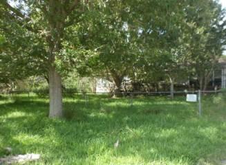 Photo of 12818 County Road 557  Alvin  TX