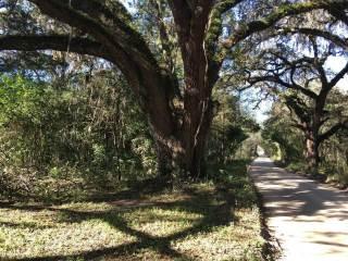 Photo of 16354 NE 40 Street  Williston  FL