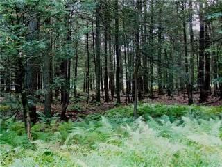 Photo of Old Log Lane  Kidder  PA