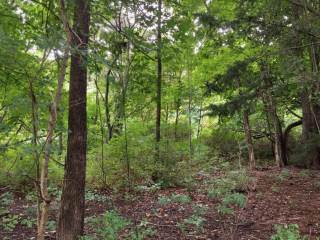 Photo of Lot 57 S Rea Avenue  Harbert  MI
