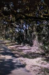 Photo of Spring Garden Avenue W DeLeon Springs  Other City  In The State Of Florida  FL