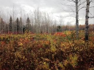 Lot 2 Weisner Rd, Lakeville, NB E1H 1C2