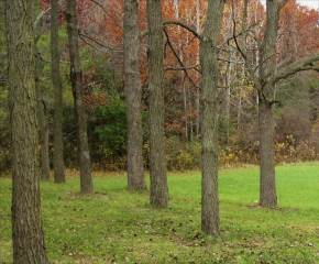 Photo of Lot B North Cape RD  Muskego  WI